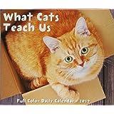 What Cats Teach Us 2019 Box Calendar