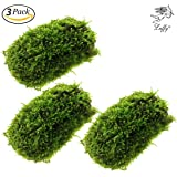 Luffy Coco Mini Moss - Builds a Beautiful and Natural Aquascape: Easy Care, Hardy and Long Lasting Plant: Filters and Provides Aquariums with Oxygen