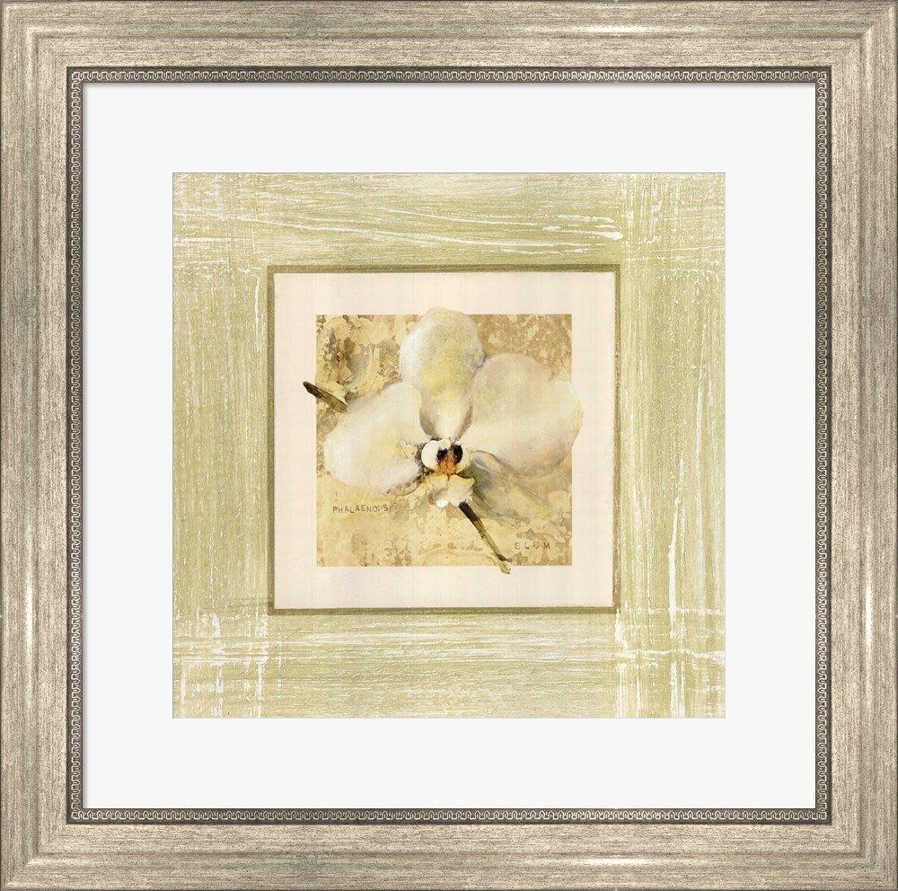 Amazon.com: Great Art Now Exotic Floral III by Cheri Blum Art Print ...