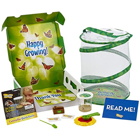 insect lore deluxe butterfly garden cup of caterpillars and feeding live habitat kit - Live Butterfly Garden