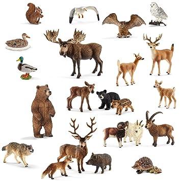 Salvajes Schleich Doméstica Lehrmittel De Wiemann Animales Set tCsxrhQdB