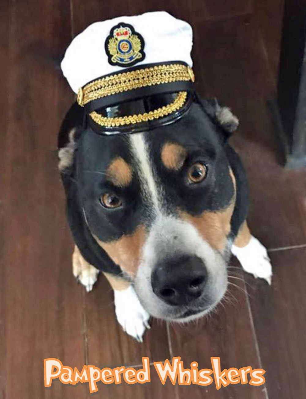 Pampered Whiskers Commanding Officer naval hat for small dogs and cats