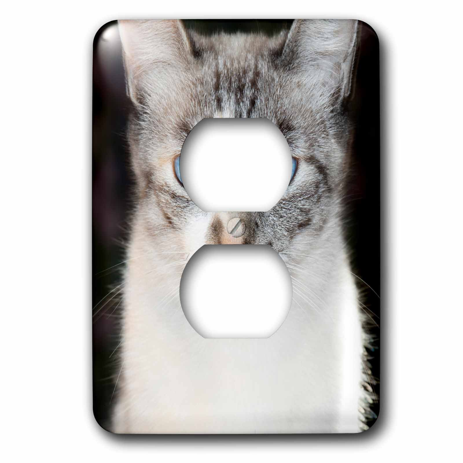 3dRose Danita Delimont - Cats - USA, California. Lynx point Siamese cat portrait. - Light Switch Covers - 2 plug outlet cover (lsp_278512_6)