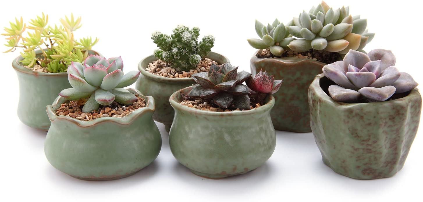 T4U Spring Serial Sets Sucuulent Cactus Plant Pots Flower Pots Planters Containers Window Boxes Green 1 Pack of 6
