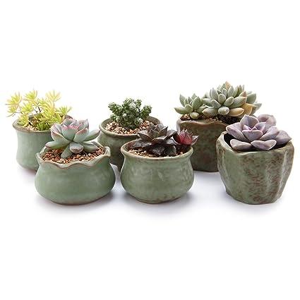 Amazon T4u 275 3spring Serial Sets Sucuulent Cactus Plant