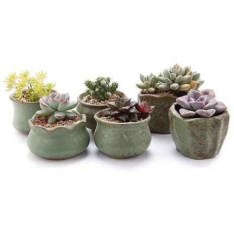 T4U 2.75 3u0026quot;Spring Serial Sets Sucuulent Cactus Plant Pots Flower Pots  Planters Containers