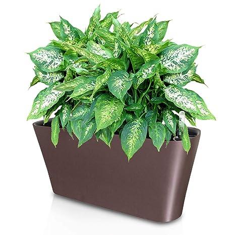 Amazon.com: Ergo Self Watering Planter Pot - Indoors, Outdoors ...