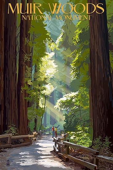 Amazon Com Muir Woods National Monument California Pathway