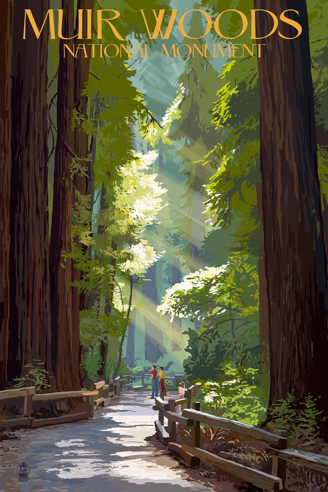 Muir Woods National Monument, California - Pathway (9x12 Art Print, Wall Decor Travel Poster)