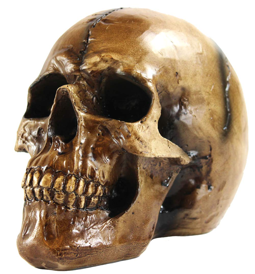 Seraphic Scary Halloween Human Skull Statue, Brown by Seraphic