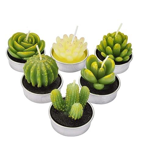 La Bellefee Bougies Cactus Succulentes Bougies Chauffe Plat Sans Fumee Pour Art Mariage Spa Cadeaux Decoration De La Maison Lot De 6