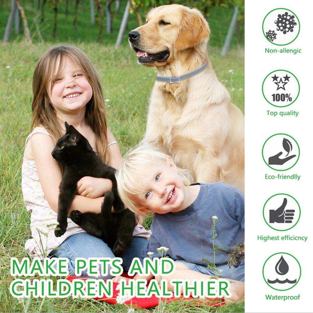 la mejor soluci/ón de plagas naturales para perros//gatos Sue Supply Collar para perros de 8 meses de protecci/ón ajustable e impermeable