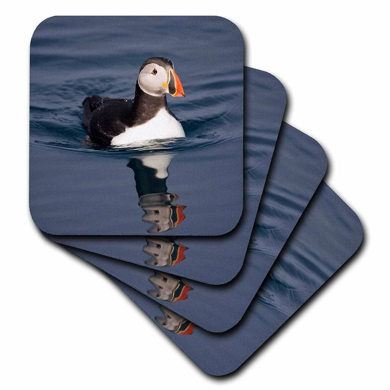 Set of 4 3dRose cst/_82444/_1 Norway Atlantic Puffin EU21 Pso0328 Paul Souders Soft Coasters Spitsbergen Isl Svalbard