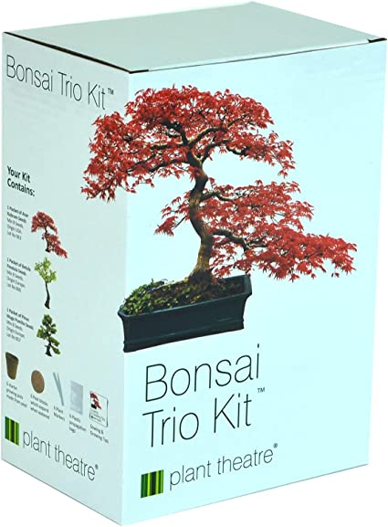 Amazon Com Plant Theatre Bonsai Trio Kit 3 Distinctive Bonsai Trees To Grow Garden Outdoor