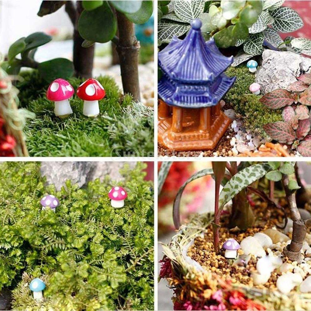rycnet - Miniatura de Hongos con micropaisaje Bonsai, Plantas suculentas, Mini decoración de jardín: Amazon.es: Hogar