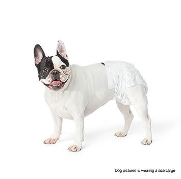 AmazonBasics - Pañal desechable para perro, Grande, pack de 30