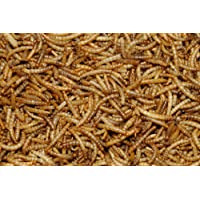 2.5 kg Dawn Chorus Dried Mealworms for Wild Birds