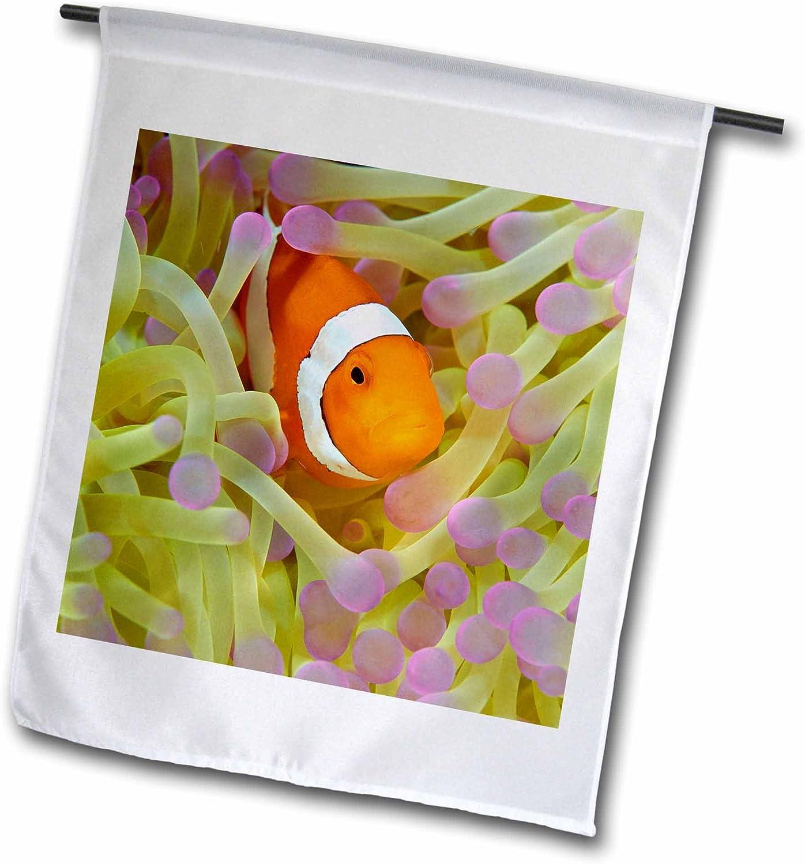 "3dRose fl_188402_1""Indonesia Papua Raja Ampat Anemonefish in Anemone Tentacles Garden Flag, 12 x 18"
