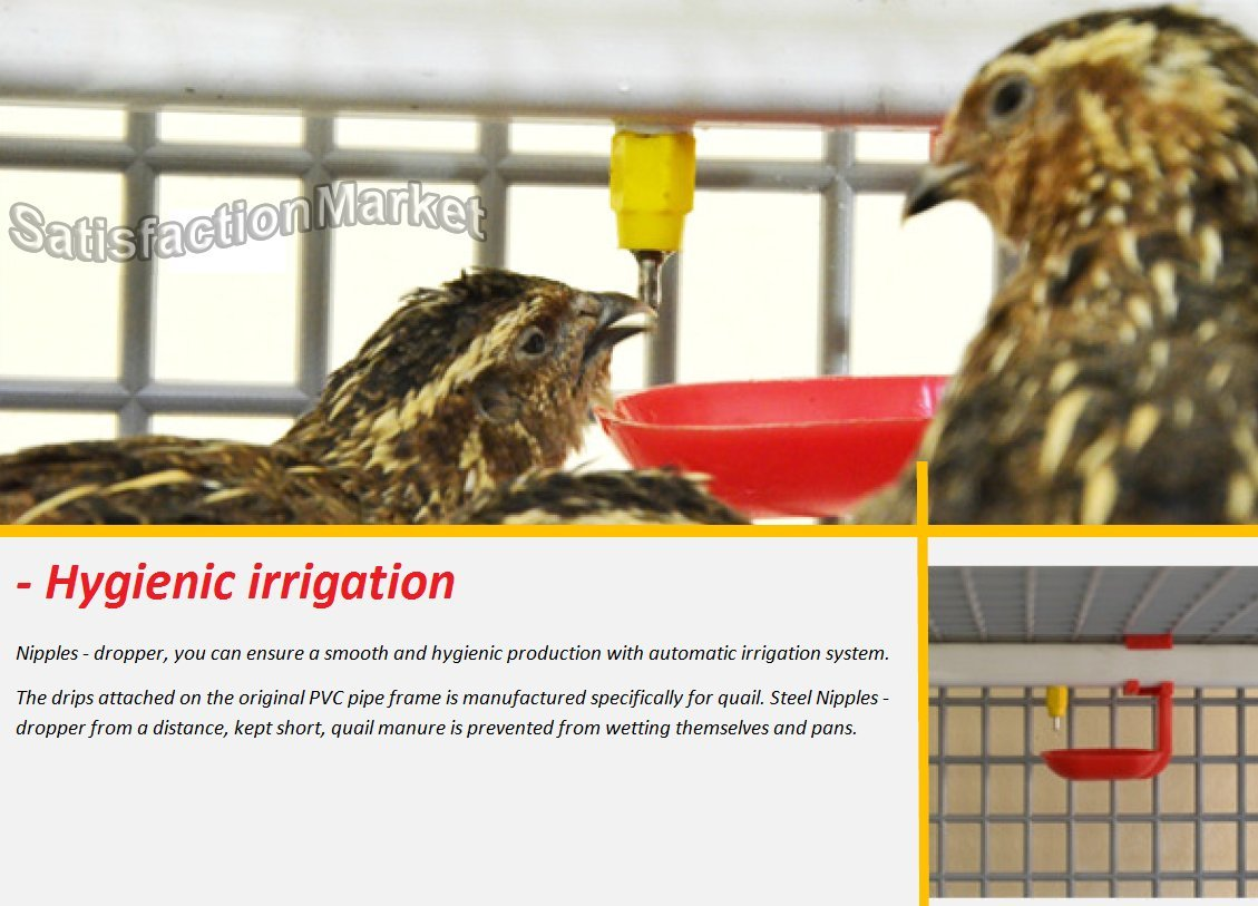 Quail Cage Two Compartment, The Patented Design, First in The World,  Professional Quail Egg cage