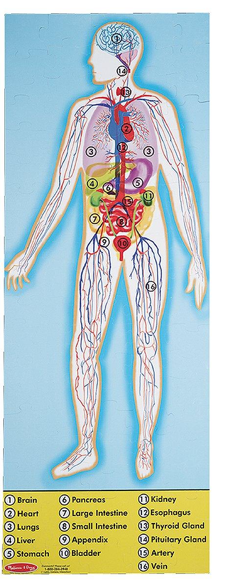 Amazon.com: Melissa & Doug Human Anatomy 2-Sided Jumbo Jigsaw Floor ...