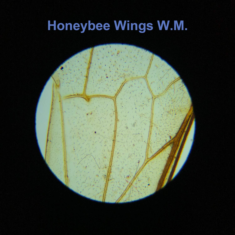 10Pcs Prepared Slides and 5 Pcs Blank Slides 15Pcs Microscope Slides for Kids Student Homeschool Use