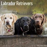 Labrador Retrievers 2022 - 18-Monatskalender: Original BrownTrout-Kalender, mit freier DogDays-App