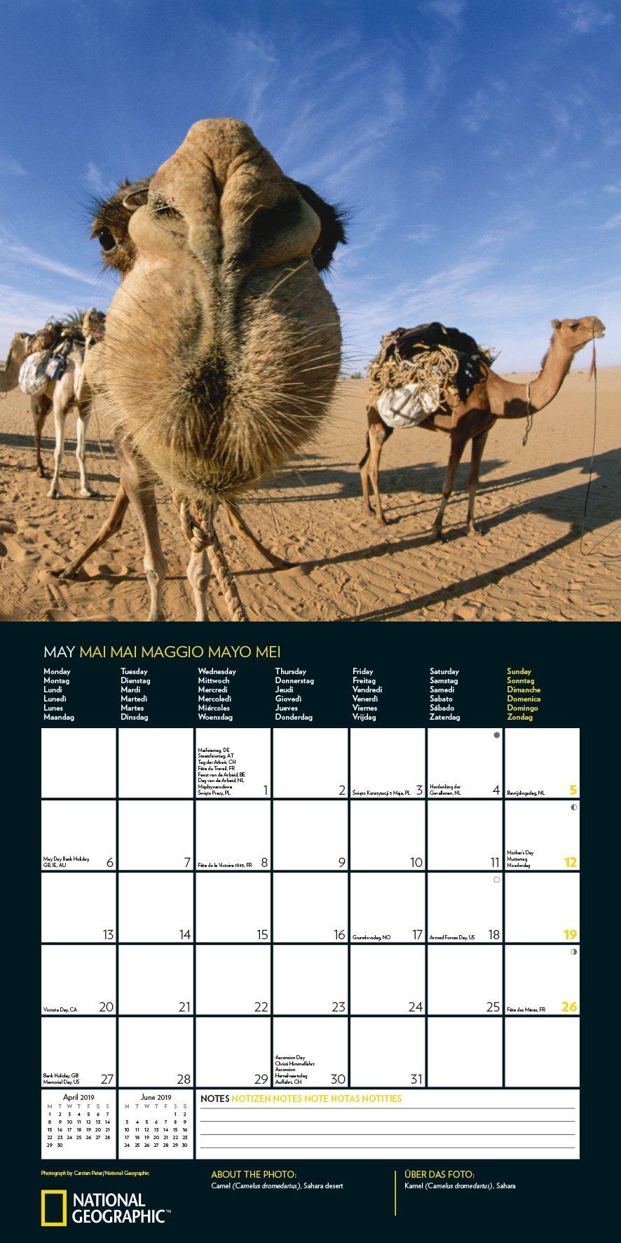 Animal Selfies 2019: National Geographic Broschürenkalender ...