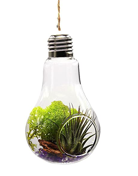 Amazon Gmakerr Light Bulb Vase Air Terrarium Container With