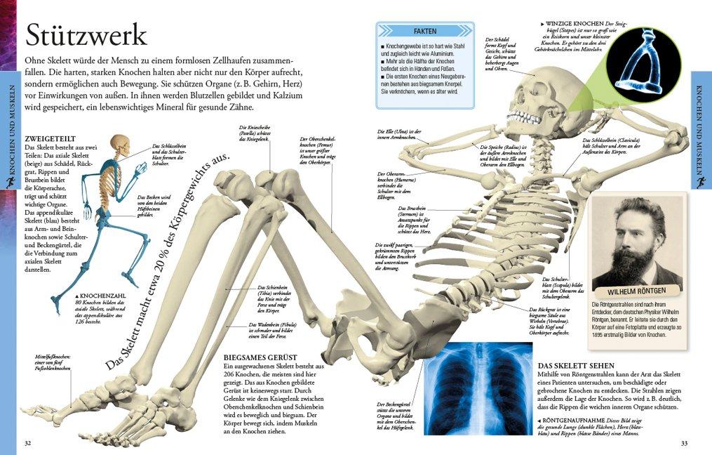 Der menschliche Körper für clevere Kids: Amazon.de: Bücher