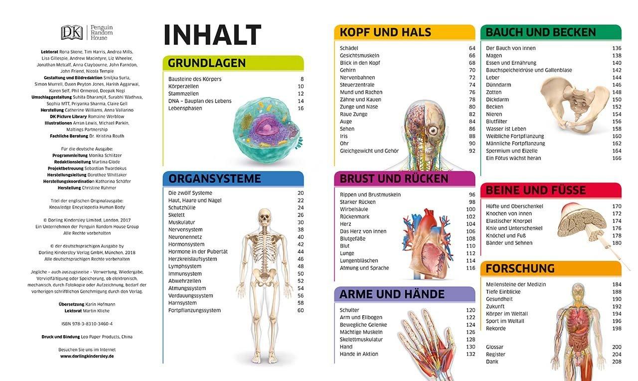 Groß Anatomie Und Physiologie Muskeln Studie Führer Bilder ...