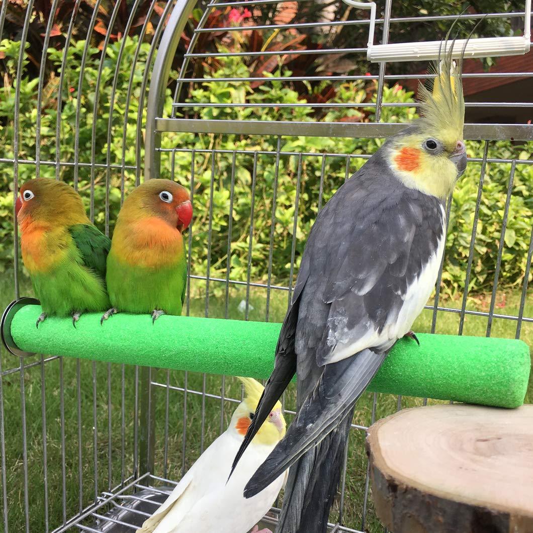Amazon.com: KINTOR - Rama de madera para loros, color ...