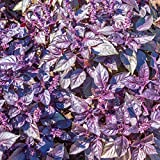 Dark Opal Basil Herb Seeds - 5 Lb Bulk - Heirloom, Non-GMO Purple Basil Herb Garden Seed - Basil Microgreens - AAS Winner