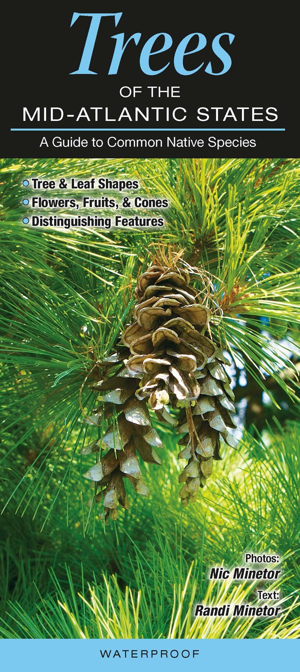 Download Trees of the Mid-Atlantic States: A Guide to Common Native Species pdf epub