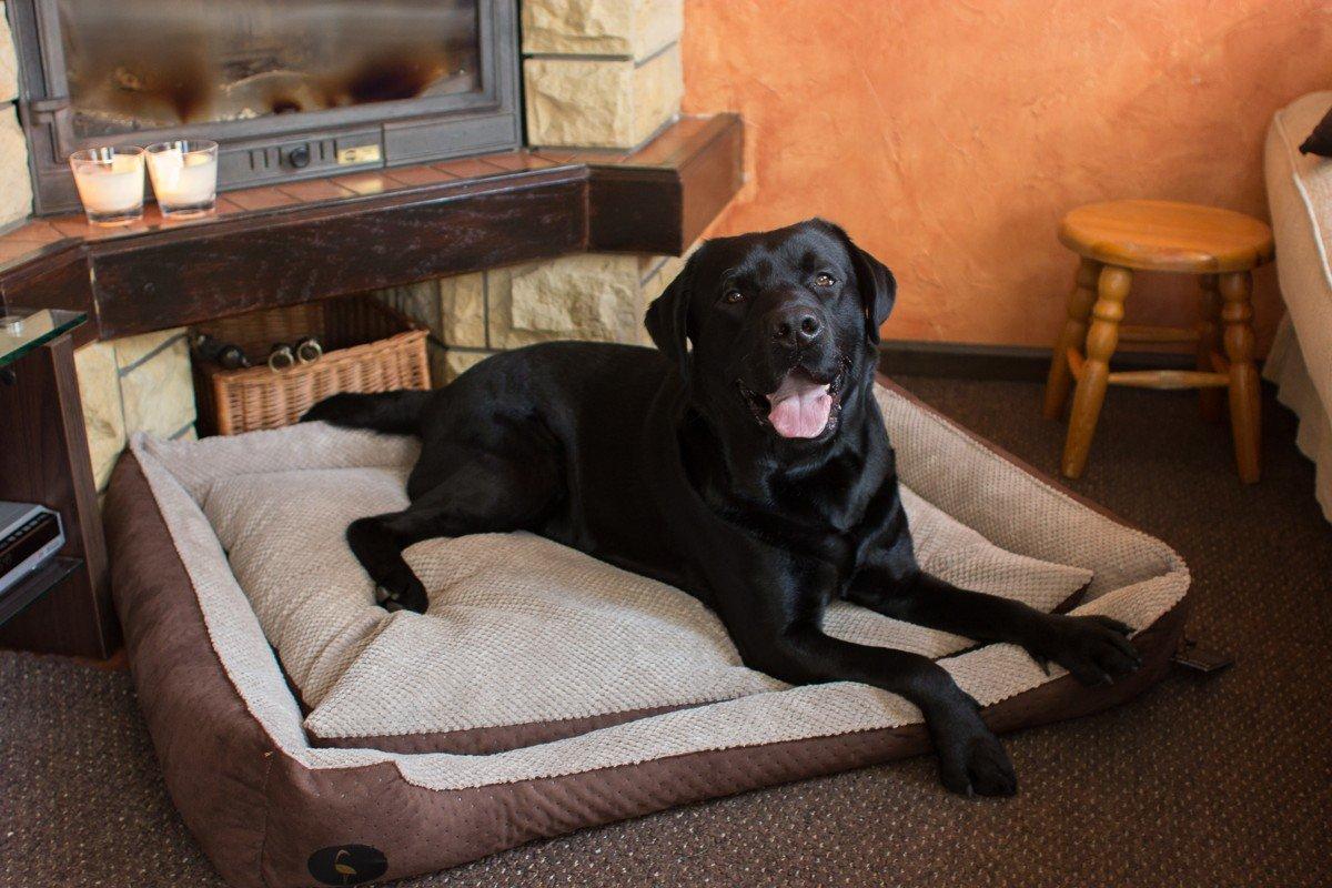 Lauren Diseño cama para perros CEZAR 70 cm x 60 cm Marino acolchada/gris   sofá   Perros - Cojín para perros   Dormir Espacio para pequeños y grandes perros ...