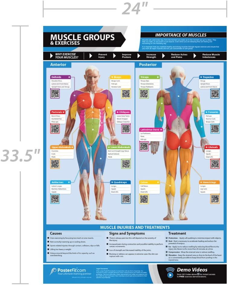 Amazon Com Muscle Groups Exercises Anterior Posterior Muscles Exercises Laminated Home Gym Poster Free Online Video Training Support Size 33 X 23 5 Improves Personal Fitness Sports Outdoors