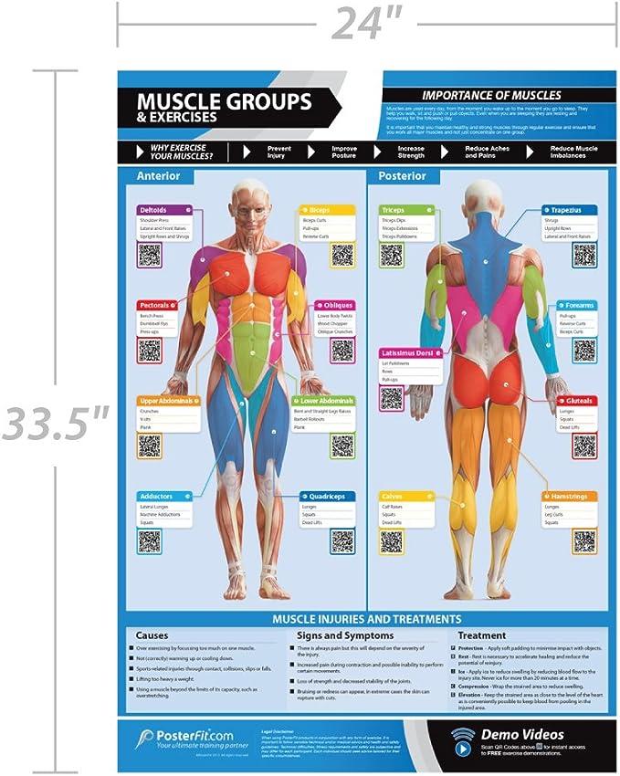 Posterfit - Póster de grupos musculares y ejercicios (33,5 x 24 cm), laminado con soporte de vídeo en línea (solo teléfono inteligente)