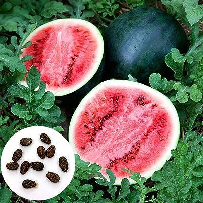 Watermelon Seeds, 100Pcs Watermelon Seeds Sweet Summer Juicy Fruit Garden Yard Farm DIY Plant - Watermelon Seeds by Angel3292 : Garden & Outdoor