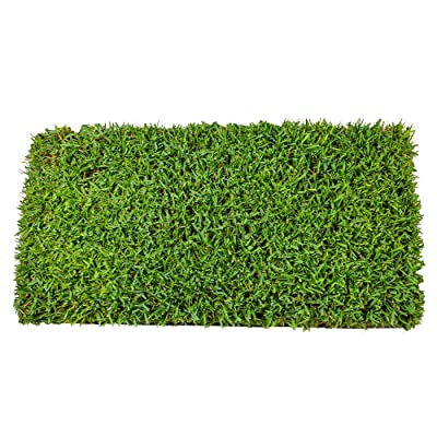 Innovation Zoysia Grass 72 Count Plug Tray | Covers 72 Sqft/Per Tray : Garden & Outdoor