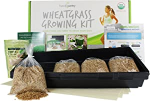 Handy Pantry Wheatgrass Growing Kit - Hydroponic - Certified Organic - Non-GMO - Easy & Fast to Grow Wheat Grass at Home for Wheatgrass Shots & Cat Grass