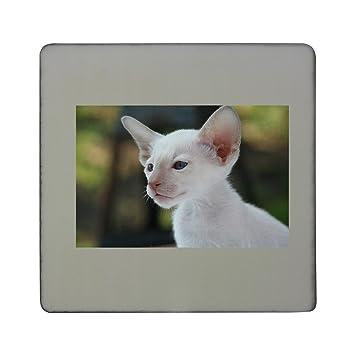 Compra Gato siamés, gato, gato, gato bebé, pelo de tablero cuadrado imán para nevera en Amazon.es