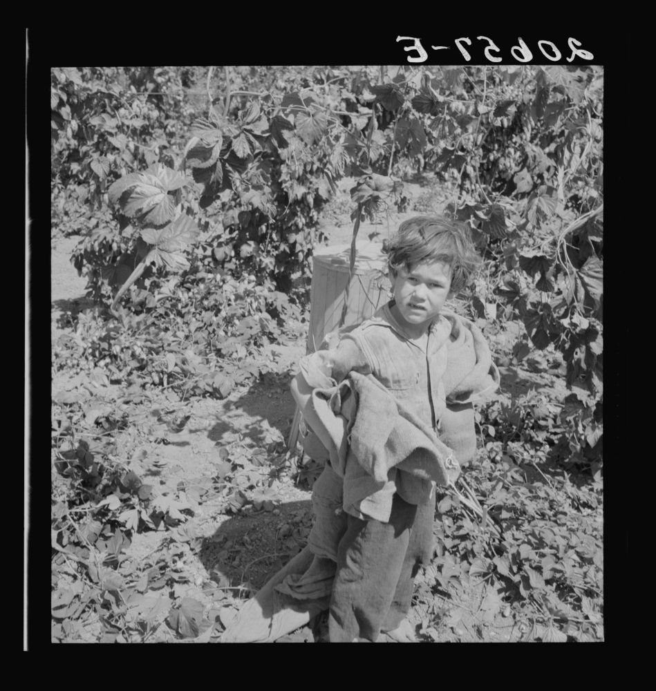 Children work in the hops in Oregon often all day and every day during the picking season. Oregon, Polk County, Independence. See general caption number 45-1