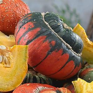 Turks Turban Gourd Garden Seeds - 2 g Packet ~60 Seeds - Non-GMO, Heirloom Vegetable Gardening Seed - Cucurbita Maxima