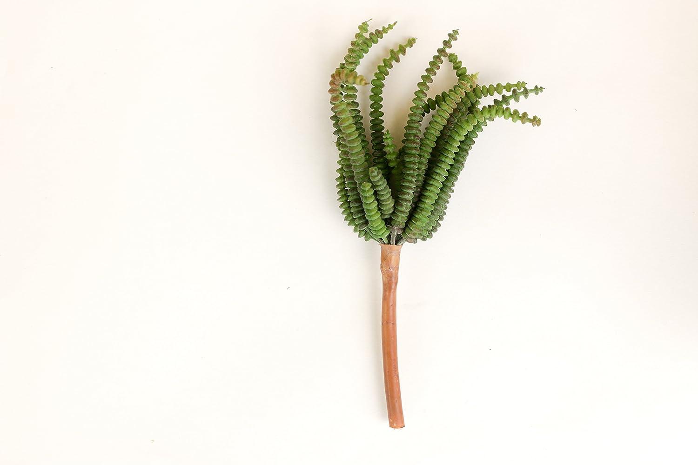 人工多肉植物、Faux Worm Succulentピック、7.5