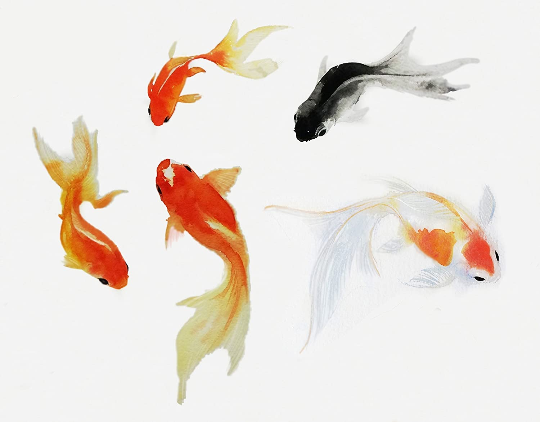 Watercolor Goldfish Giclee Art Print