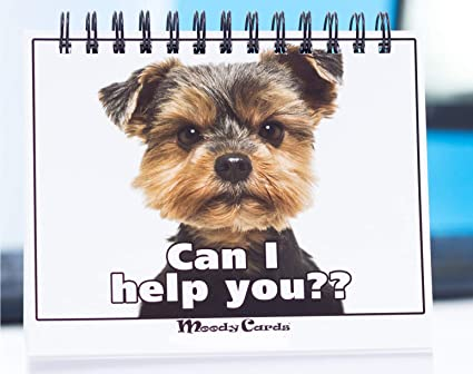 Image of: Funniest Memes Funny Office Gifts Doggy Moodycards Great Cubicle Accessories Make Everyone Laugh With These Amazoncom Amazoncom Funny Office Gifts Doggy Moodycards Great Cubicle