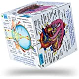 ZooBooKoo Human Body Systems and Statistics Cube Book