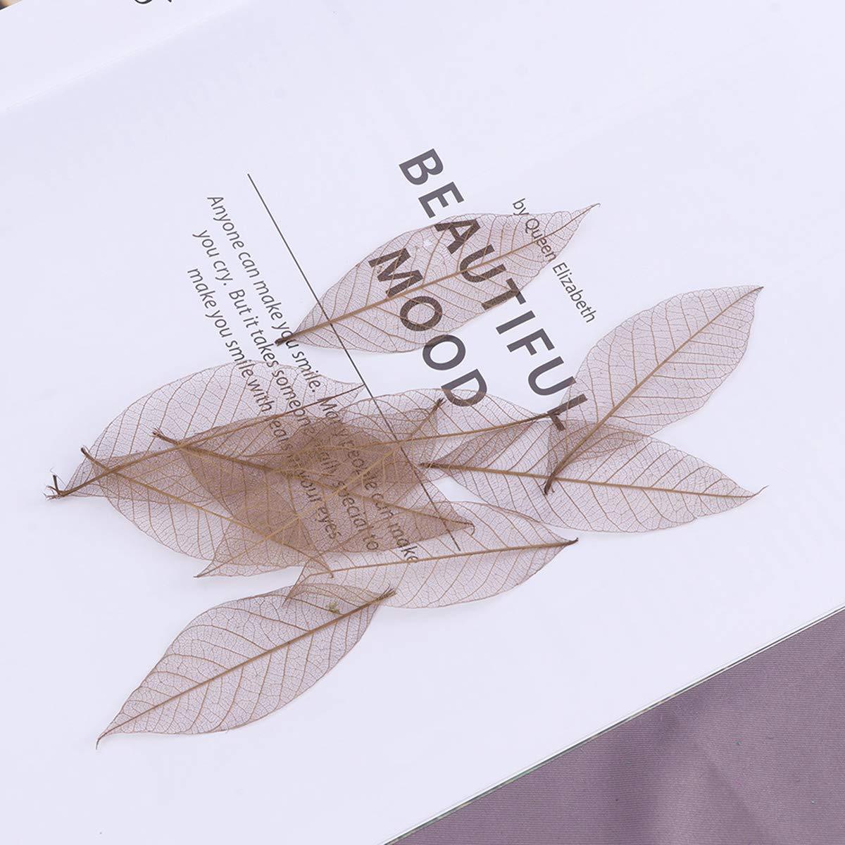marr/ón SUPVOX 50 piezas de caucho natural esqueleto deja hojas artificiales tarjeta del arte Scrapbook Diy hecho a mano adorno decoraci/ón arte