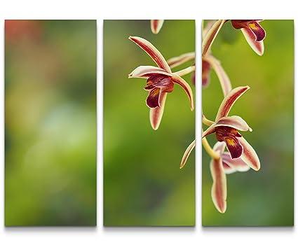Sin us 74 quadro su tela 130x90cm prato di orchidea rosa fotografia