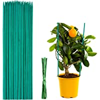 Varillas de Soporte para Plantas 50Pcs, Varillas de Bambú Verde de 30 cm,Varillas de Soporte para Plantas de Flores con…