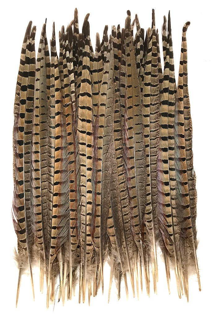 Ringneck Pheasant Tail Feathers 14-16'' - Pack of 50